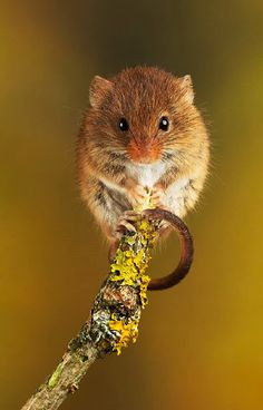 Lie back and appreciate the pureness of these adorable little harvest mice hanging out #adorable #animals #flowers #mice