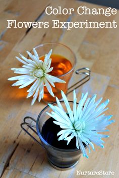 Fun color changing flowers experiment :: nature science project for kids :: STEM project