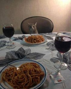 My date tonight #valentines #cat #date
