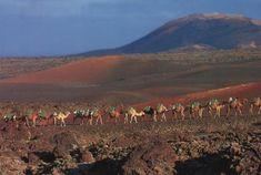 43 Lanzarotte Ideas Lanzarote Canary Islands Canary Islands Spain