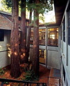 Redwoods, Mill Valley Public Library, Mill Valley, California, 2012.  Photo credit: Robert Dawson