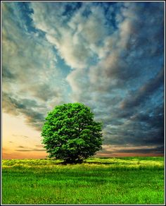 ~~Integrity ~ lone tree and dramatic clouds, Belgrade, Serbia by Katarina 2353~~