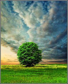 ~~Integrity ~ lone tree and dramatic clouds, Belgrade, Serbia by Katarina 2353~~