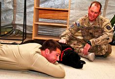 Sgt. 1st Class Zeke, a combat stress Dog