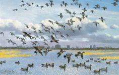 Sir Peter Scott flock of birds/geese First Sunday Of Advent, The Wild Geese, Waterfowl Hunting, Flock Of Birds, Bird Artwork, Autumn Day, Wildlife, Artist, Animals