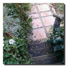 un giardino in diretta: Resiste il geranio, resiste #giardinoindiretta