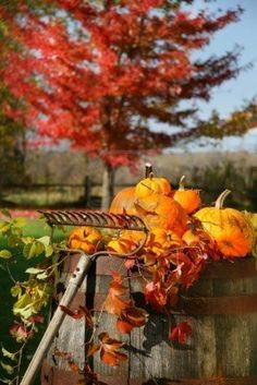 Autumns colorful harvest with beautiful red maple tree in background Stock Photo