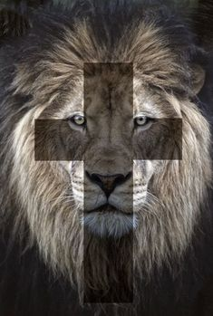 Where the LION is mainly & mostly represented is AFRICA. As for the bible the lion tribe of JUDHA, the root & and offspring of DAVID, the return of our only lord and savior Jesus Christ the eternal KING. Lion Wallpaper, Tribe Of Judah, Jesus Christus, Saint Esprit, Prophetic Art, Lion And Lamb, Lion Of Judah, Poster S, Jesus Freak