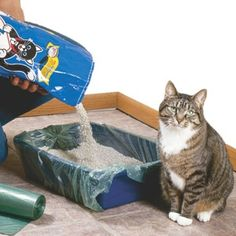 101 Household Tips for Every Room in your Home | Line cat litter tray with a garbage bag for easier cleaning.