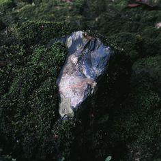 Stone & Moss  #VSCOcam #grid #Borneo #Indonesia