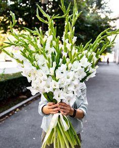 Simbol al prieteniei și tăriei de caracter, un buchet cu gladiole este modul prin care poți mulțumim cuiva sau prin care îți poți arăta aprecierea față de cineva. Gladiolele sunt flori rezistente, așa că destinatarii se vor bucura pentru mult timp de frumusețea lor. Celery, Modul, Vegetables, Vegetable Recipes, Veggies