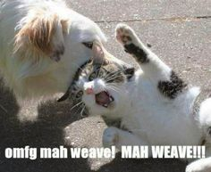 haha--ITS NOT FUNNY THAT THE KITTEN IS BEING TORTURED, BUT THE CAPTION IS HILARIOUS