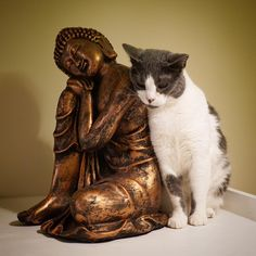 Lily and the Buddha. Ocean Creatures, Cute Creatures, Beautiful Creatures, Budha Statue, Cat Statue, Crazy Cat Lady, Crazy Cats, Animals And Pets, Cute Animals