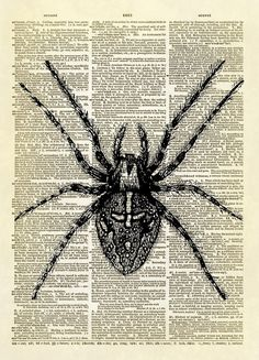"This print features a beautiful antique illustration of a spider from the 1916 publication ""Outlines of Zoology"". This detailed drawing makes this an interesting print to hang anywhere in your home or"