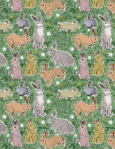 Perfect little bunny rabbits