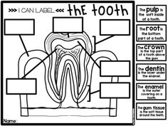*Happy Teeth* Dental Health Craft and Fun Activities in English and Spanish