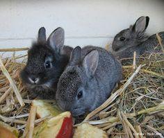 Kaninchenfan Lucky - Mein Kaninchenloch: Tiere fotografieren: Wie setze ich welches Tier am...