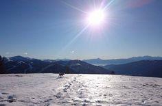 Skitouren-Wintertraum mit Hund      #skitouren #winter #winteriscoming #wandern #schnee #landschaft #hunde #urlaubmithund #tierischerurlaub #hund #tipps #checkliste #wintersport #hundeurlaub #outdoorlife #reisenmithund #reisen #freizeit #bergrettung #wandernmithund #berge #mountains #mountainlovers #winterurlaub #skiurlaub