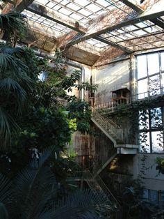 wild garden in an abandoned building.