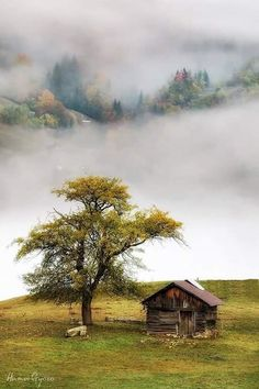 Photo Illustration, Country Roads, Cabin, House Styles, Amazing, Painting, Trees, Art, Green
