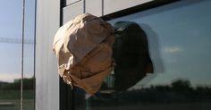 Focus.de - Insektenplage im August: Der Papierknäuel-Trick: Gegen diesen Einfall sind selbst fiese Wespen chancenlos - Video - Video