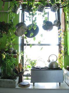 plant stand, cottag, lofts, vine, green kitchen
