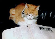 """""""Literary cat is not amused."""" 