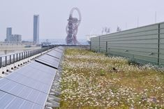 London Olympic's Solar Green Roof designed for biodiversity - S. Renewable Energy, Solar Energy, Solar Power, Green Roof Benefits, Urban Heat Island, Roof Extension, Living Roofs, Roof Styles, Flat Roof