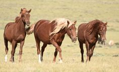 Update on Wild Horses and Burros in Jeopardy