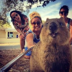 Funny pictures about The Most Acceptable Use Of A Selfie Stick. Oh, and cool pics about The Most Acceptable Use Of A Selfie Stick. Also, The Most Acceptable Use Of A Selfie Stick photos. Smiling Animals, Happy Animals, Funny Animals, Cute Animals, Smiling Faces, Animal Memes, Selfies, Animal Pictures, Funny Pictures