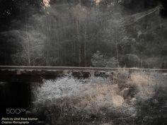 Perception - Conway, South Carolina