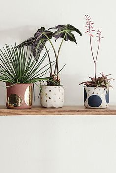Glowing Arbor Pot - anthropologie.com