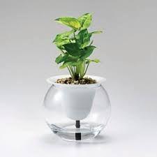 ผลการค้นหารูปภาพสำหรับ self watering containers diy