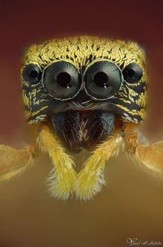Astonishing Insect Life Photography   >  the spider's focus is stunning.