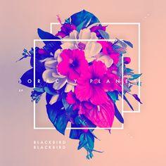 Blackbird Blackbird EP - Samüel Johnson. I just love mixing #geometric shapes with photos!