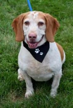 6 / 15    Petango.com – Meet Herbie, a Basset Hound / Mix available for adoption in NEWARK, DEAddress  455 Stanton-Christiana tanton Road , Unit, NEWARK, DE, 19713  Phone  (302) 998-2281  Email  frontdesk@delspca.org