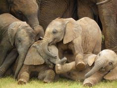 Addo Elephant National Park. CUTE!