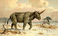 New fossils suggest unicorns might have been real. But they look horrifying so don't get too amped. http://www.seattlepi.com/science/article/New-fossils-suggest-unicorns-might-have-been-real-7213699.php