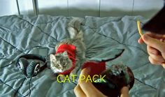Cat packs a French fry, silly, but the cat expressions are priceless!