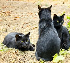 Black Cats In Autumn Garden Stock Photo, Picture And Royalty Free ...