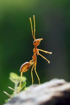 Accade anche questo nella tranquillità del bosco dove persino una piccola formica può diventare un punto di riferimento dei nostri pensieri. Romano Battaglia, Foglie, 2009