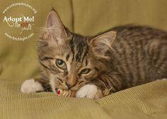 Rosalie is available to adopt from Coronado Veterinary Hospital, http://www.nadovet.com