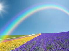 Fond d'écran d'un arc-en-ciel au dessus d'un champ de fleurs