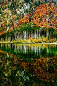 Belezas da vida : Foto