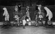 Fritz Schulz - Court Act What Is English, Circo Vintage, Morecambe, Blackpool, Sideshow, Back In The Day, Big Cats, Old Photos, Lions