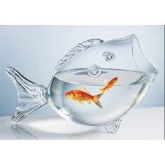 Fish Bowl - cute but a bit confining for the fish