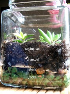 Describe of a succulent terrarium, including this nifty photo of the layers