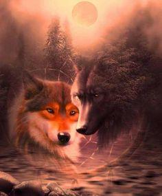Love my wolves ;) Anime Wolf, Beautiful Creatures, Animals Beautiful, Cute Animals, Wolf Tattoos, Wolf Spirit, Spirit Animal, Tier Wolf, Art Indien