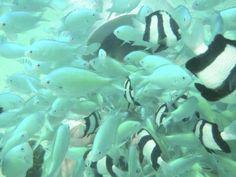Under the sea. Saipan Island, Pacific Ocean, Under The Sea, Travel, Viajes, Destinations, Traveling, Trips