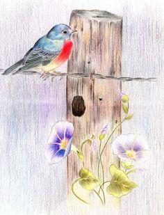 Custom Pet Portraits - Original Color Pencil Art - Tropical Bird by PetPetPaint, $90.00